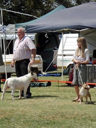 Miniature Bull Terrier Network - South Africa